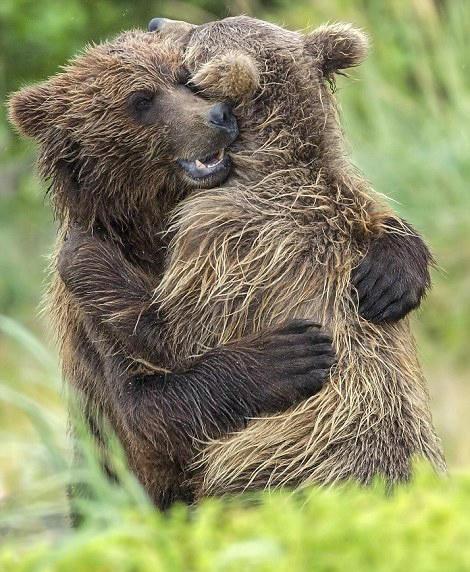 爱意爆棚 美失散熊崽兄妹重逢后紧紧相拥