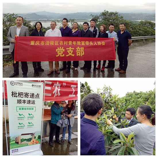 重庆涪陵:南沱枇杷节开幕