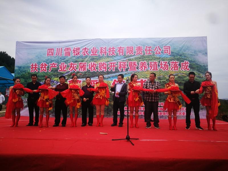 杨雪银:投资灰雁养殖基地助力家乡扶贫